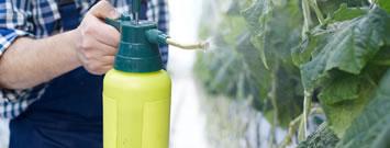 Desinfección de producción alimentaria vegetal