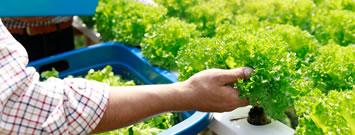 Productos agropecuarios saludables y libres de bacterias