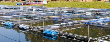 Sanidad en producción acuícola y Certificación