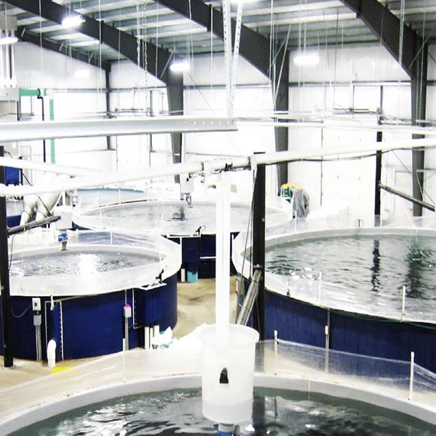 Sanitización en producción acuícola